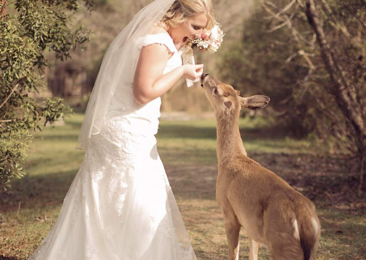 Bridal Session with the Butterfly Garden Deer!| Blog | Ahnvee ...
